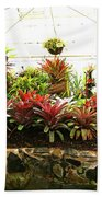 Massed Bromeliad In Hothouse Beach Towel