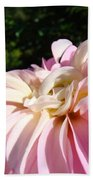 Master Gardener Pink Dahlia Flower Garden Art Prints Canvas Baslee Troutman Beach Towel