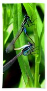Mating Damselflies Beach Towel