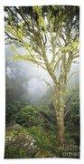 Maui Moss Tree Beach Towel