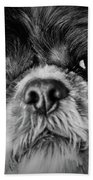 Max - A Shih Tzu Portrait Beach Towel