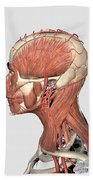 Medical Illustration Showing Human Head Beach Towel