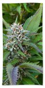 Medicinal Marijuana Growing Beach Towel