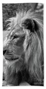Meditative Lion In Black And White Beach Towel