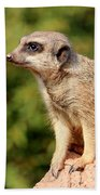 Meerkat 1 Beach Towel