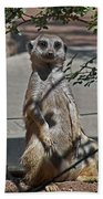 Meerkat 2 Beach Towel