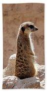 Meerkat Standing On Rock And Watching Beach Towel