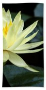 Mellow Yellow Water Lily Beach Towel