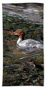 Merganser And Spawning Salmon - Odell Lake Oregon Beach Towel