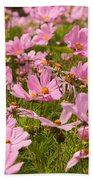 Mexican Aster Flowers 1 Beach Towel