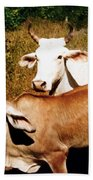 Mexican Cattle Beach Towel