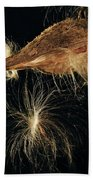 Milkweed Pod Beach Towel