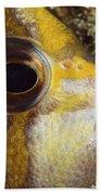Milletseed Butterflyfish Beach Towel