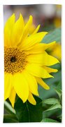 Mini Sunflower And Bud Beach Towel