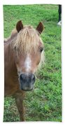 Miniature Horse Beach Towel