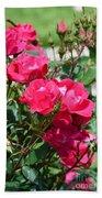 Miniature Roses Beach Towel