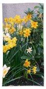 Mixed Daffodils Beach Towel