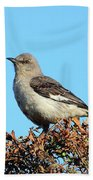 Mockingbird . 7682 Beach Towel