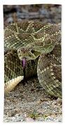 Mohave Green Rattlesnake Striking Position 3 Beach Towel