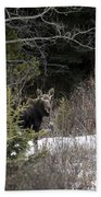 Mom And Calf  In The Forest Beach Towel