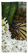 Monarch And The Butterfly Bush  Beach Sheet