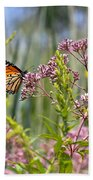 Monarch Butterfly In Joe Pye Weed Beach Towel