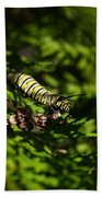 Monarch Caterpillar Beach Towel