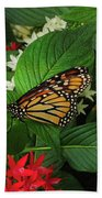 Monarch Framed Beach Towel