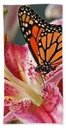 Monarch On A Stargazer Lily Beach Towel