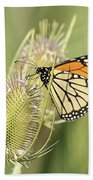 Monarch On A Thistle  Beach Towel