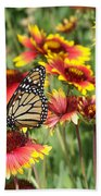 Monarch On Blanketflower Beach Sheet