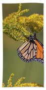 Monarch On Goldenrod Beach Towel