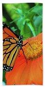 Monarch On Mexican Sunflower Beach Sheet