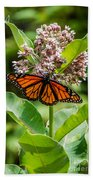 Monarch On Milk Weed Beach Towel