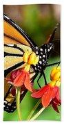 Monarch Pollination 1 Beach Towel