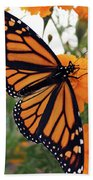 Monarch Series 1 Beach Towel