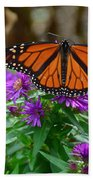 Monarch Spreading Its Wings Beach Sheet