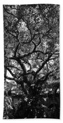 Monastery Tree Beach Towel