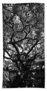 Monastery Tree Beach Towel