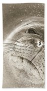 Monk Seal Beach Towel
