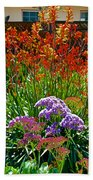 Yellow-orange Kangaroo Paws And Sea Lavender By Napier At Pilgrim Place In Claremont-california Beach Towel