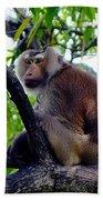 Monkey In Tree Beach Towel