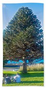 Monkey Puzzle Tree In Central Park In Bariloche-argentina  Beach Towel