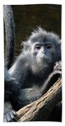 Monkey Trio Beach Towel