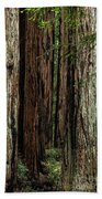 Montgomery Woods State Natural Reserve Beach Towel
