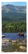 Moose Baxter State Park Maine 2 Beach Towel