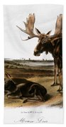 Moose Deer (cervus Alces) Beach Towel