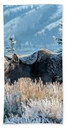 Moose In Cold Winter Ice Beach Sheet