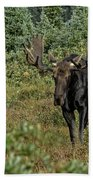 Moose In Shrubs Beach Towel