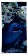 Moray Eel Or Muraenidae Fish Beach Towel